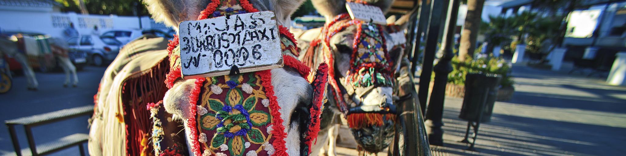 Mijas, Donkey Taxi