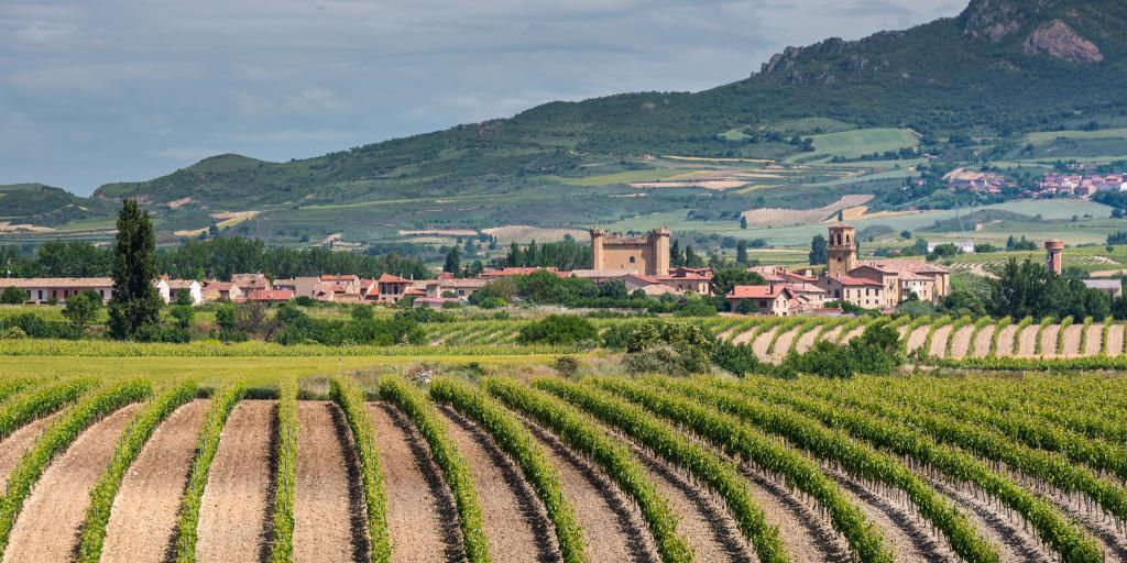 Wine vineyard in La Rioja, Spain, with mountains in the background