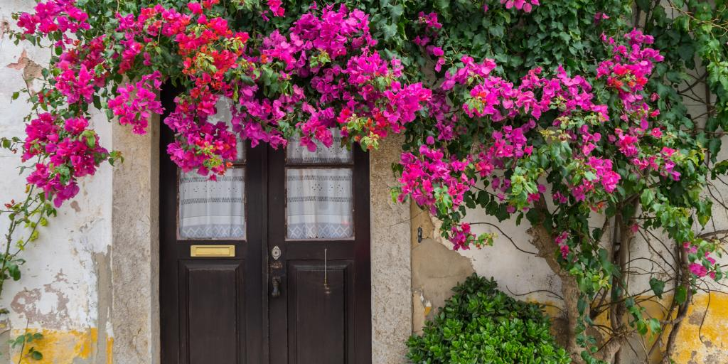 Front door of a house in Obidos covered in pink flowers