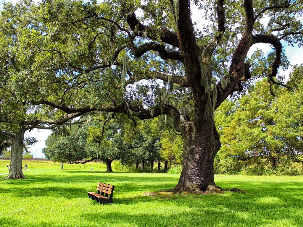 A bench underneath an old oak tree in the Jean Lafitte National Historical Park & Preserve - the battlefield of Battle of New Orleans in 1812