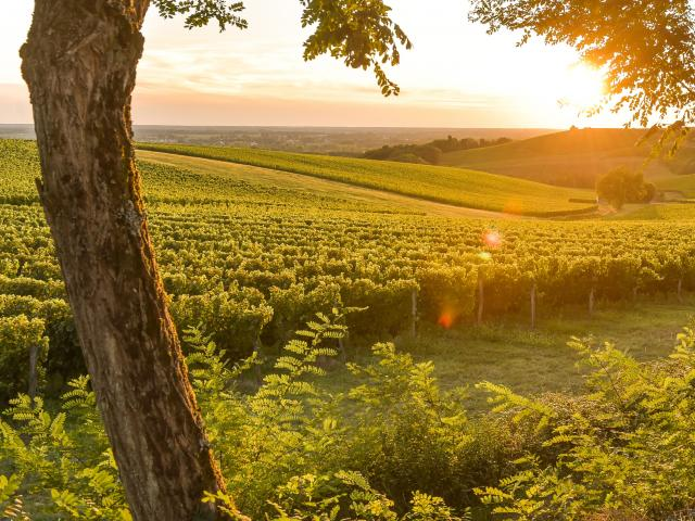 French road trip through vineyards and rolling hills