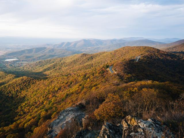 Fall trees in Blue Ridge Mountains with a road running through it in Shenandoah National Park, Virginia