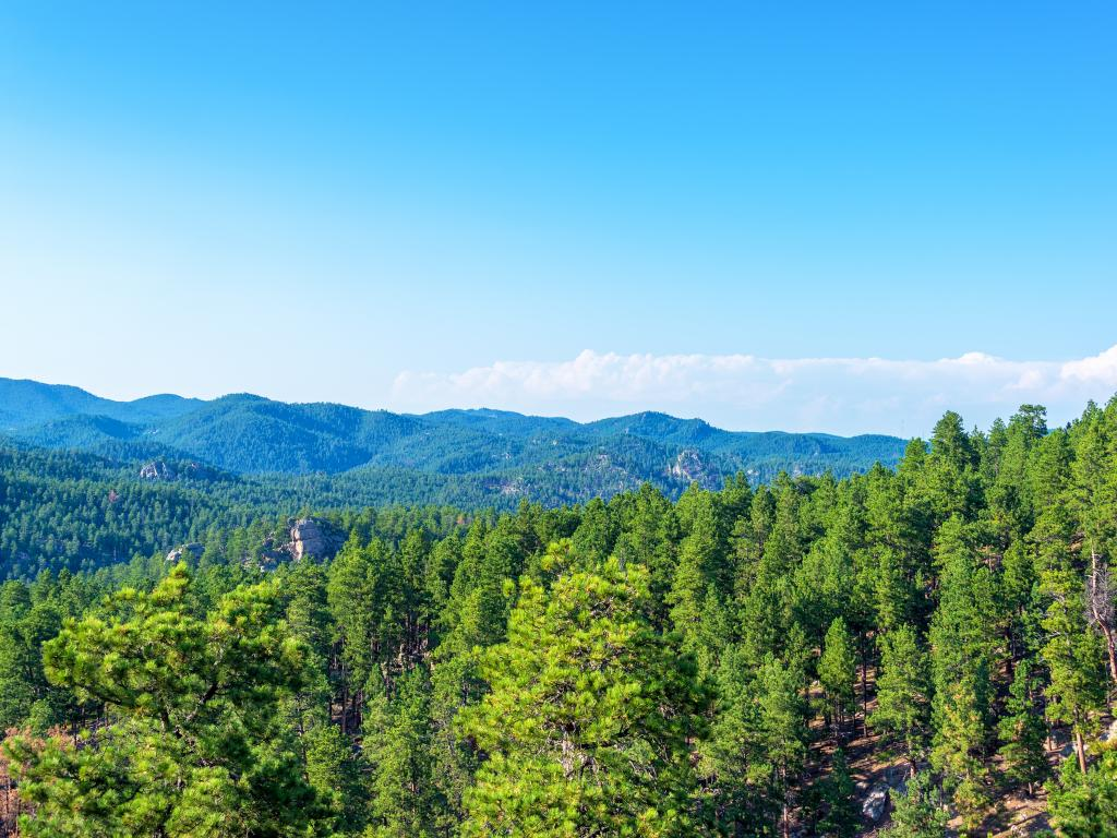 The Black Hills National Forest in South Dakota has a lot more to explore than just Mount Rushmore.