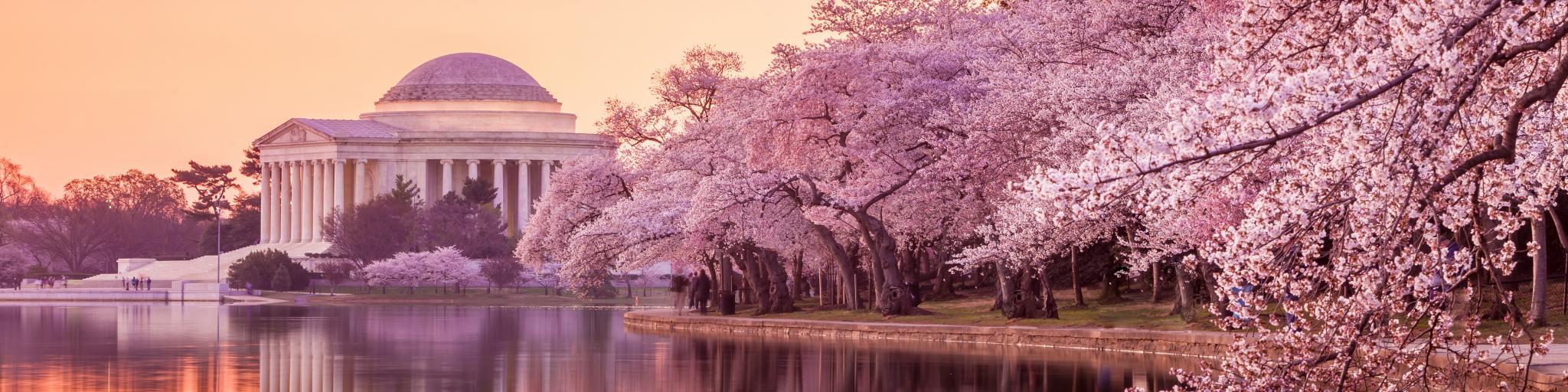 Jefferson Memorial during the Cherry Blossom Festival. Washington DC