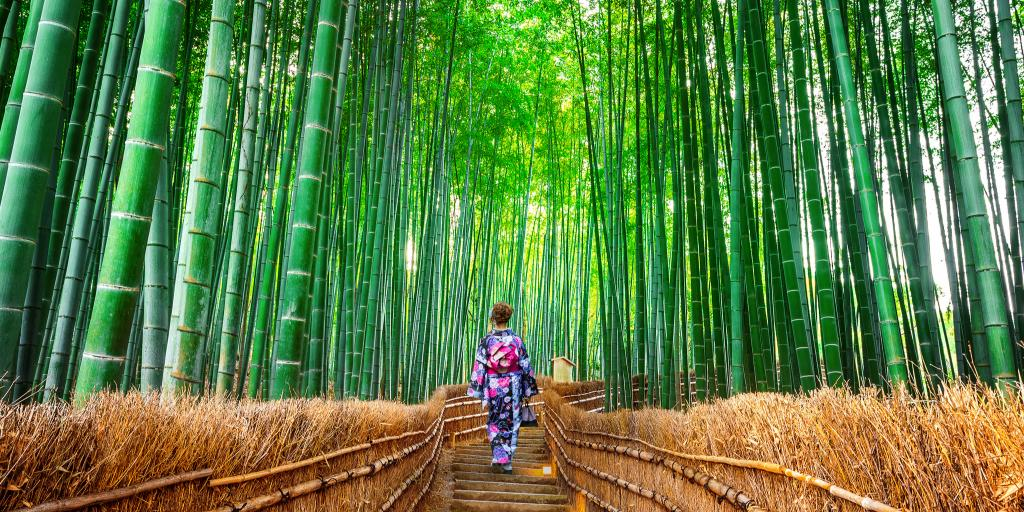 A woman dressed in a kimono walking through Arashiyama Bamboo Grove, Kyoto