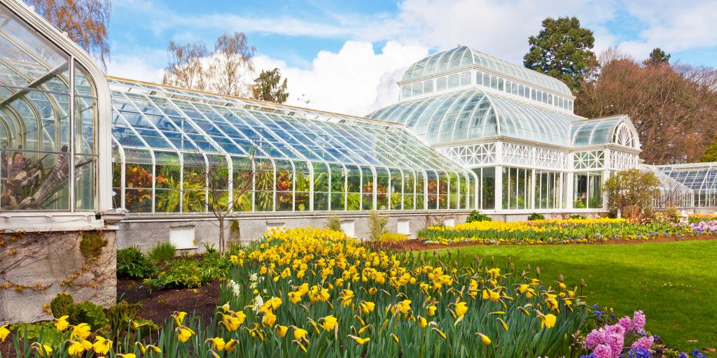 The conservatory in Seattle's Volunteer Park blooms with yellow and pink flowers