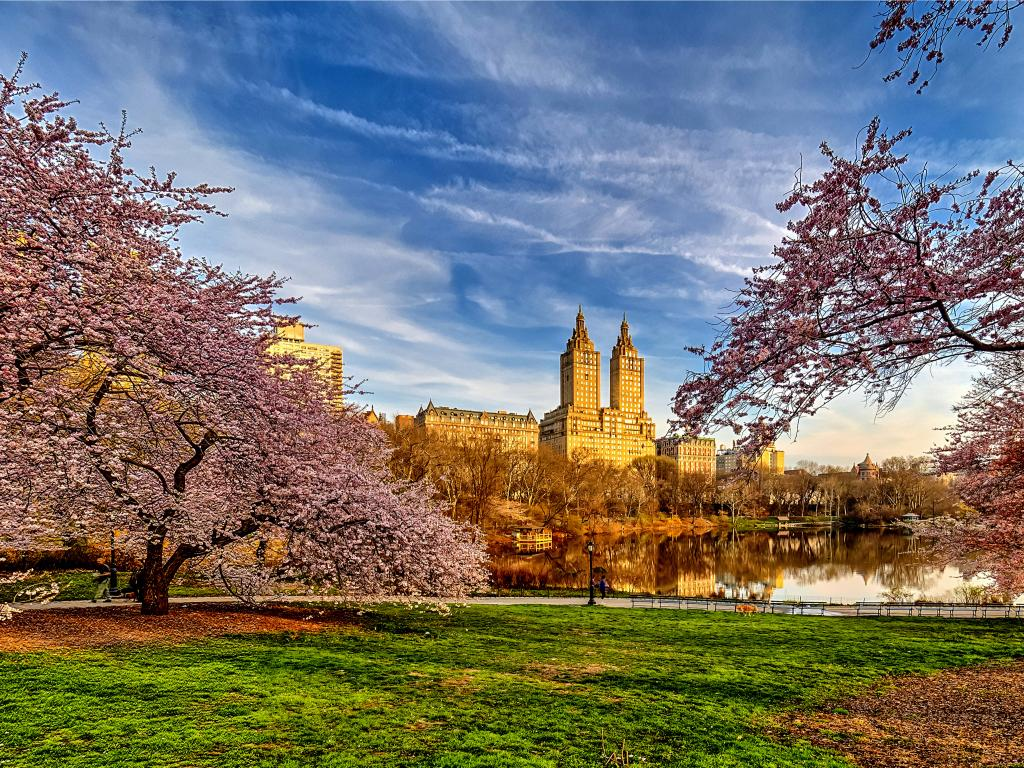 Blossoming Cherry trees reflecting the water in early spring at Central Park with the skyline of Manhattan, New York.