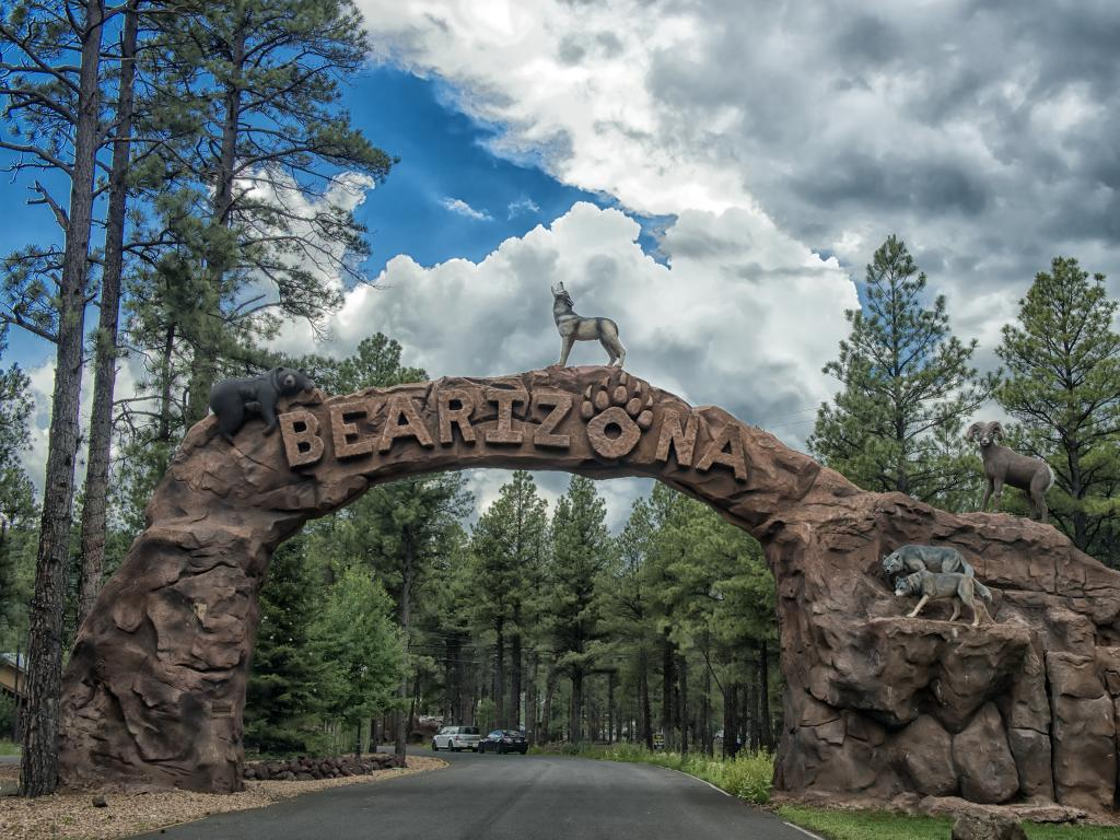 An arch with Bearizona, statues of wolves, and bear in it and two cars driving along a curvy road with a sight of tall pine trees
