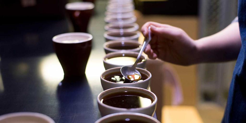 Cups of coffee lined up on a table at the Roastery by Nozy Coffee