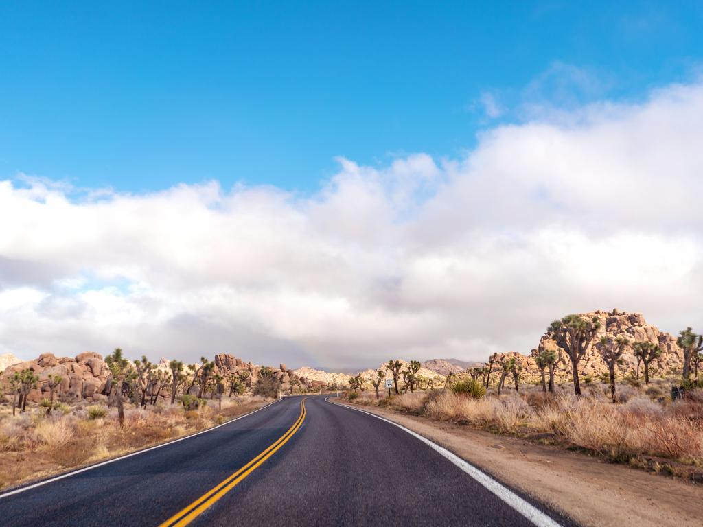 A nice day along an empty road in a desert with Joshua trees on the roadsides.