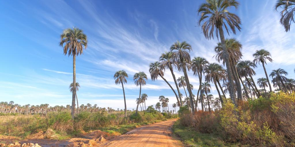 Palm trees each side of a muddy dirt road at El Palmar National Park, Argentina