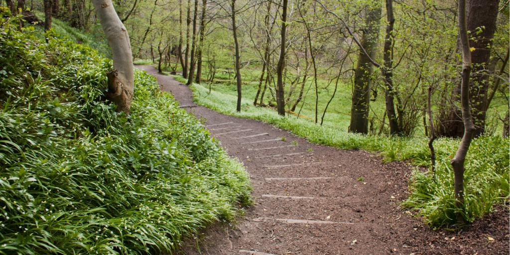 A walking path winds through the forest in the verdant Roslin Glen Country Park in Scotland