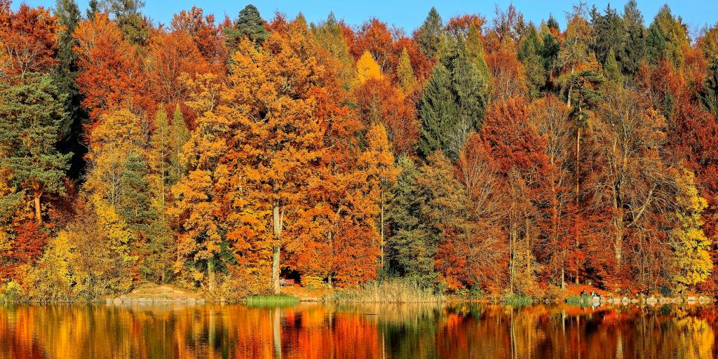 Autumn leaves and their reflections on a lake in Horgenberg, Horgen, Switzerland
