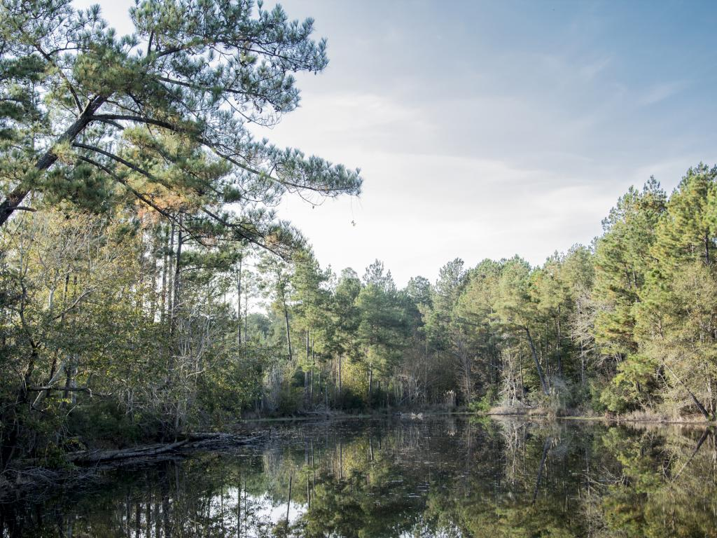 The pine forests of De Soto National Forest stretch for miles in southern Mississippi.