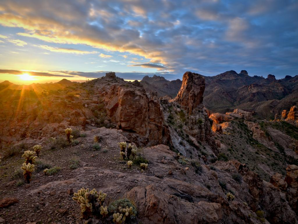 A beautiful view of the sunrise with a thick gray sheet of clouds spread in the morning sky and the golden sun giving light to the mountains with a golden shade and saguaro cactus everywhere in the sand in Kofa National Wildlife Refuge, Arizona