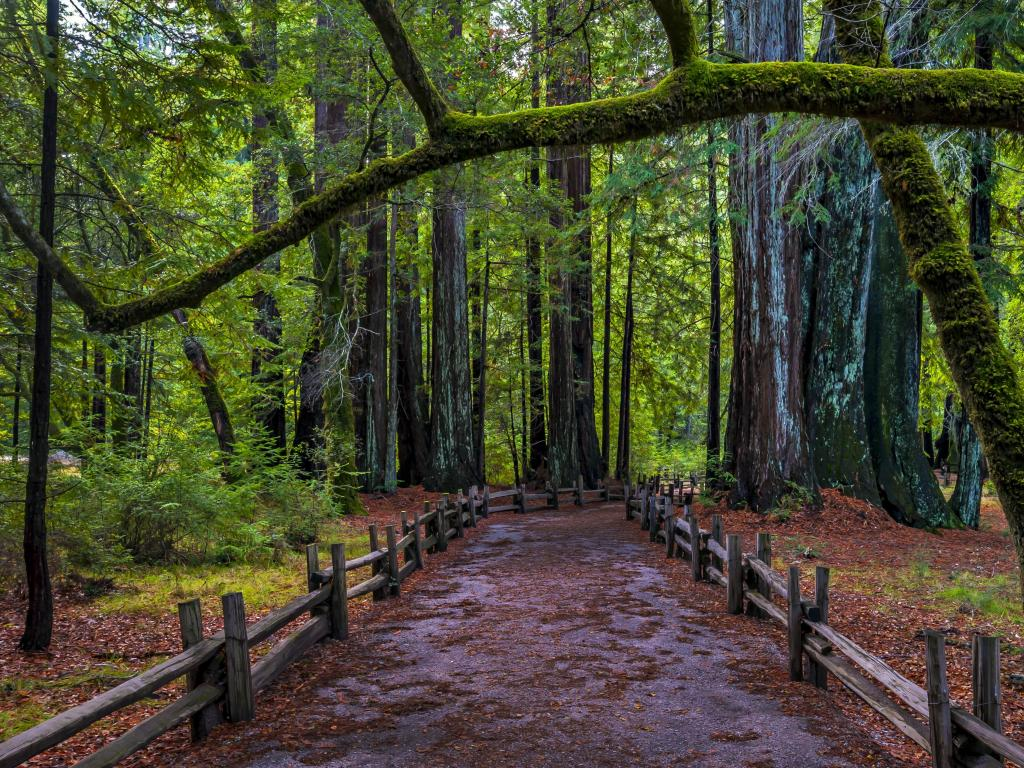 A hiking trail in Big Basin Redwoods State Park on the road trip from San Diego to San Francisco