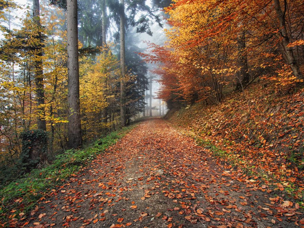 Orange and yellow leaves cover a wooded path in Kirchzarten, Germany