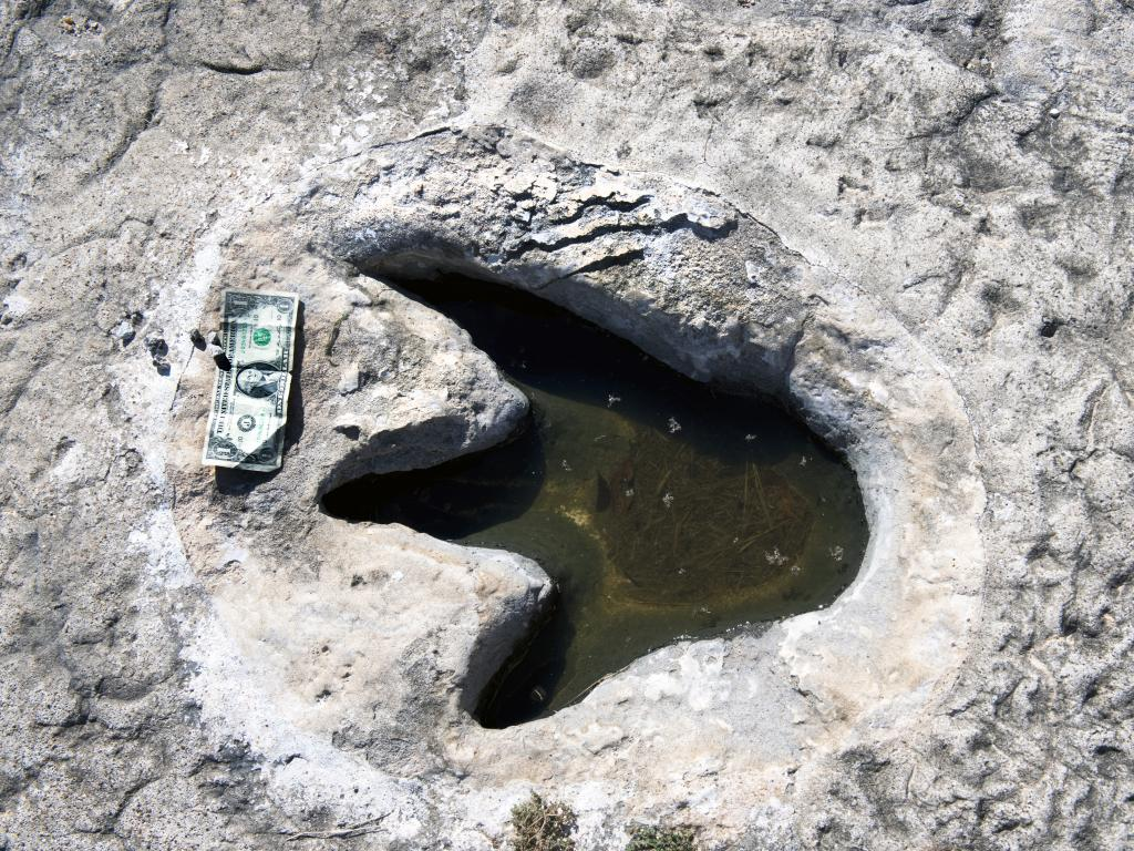 Preserved dinosaur footprints in the Dinosaur Valley State Park, Texas