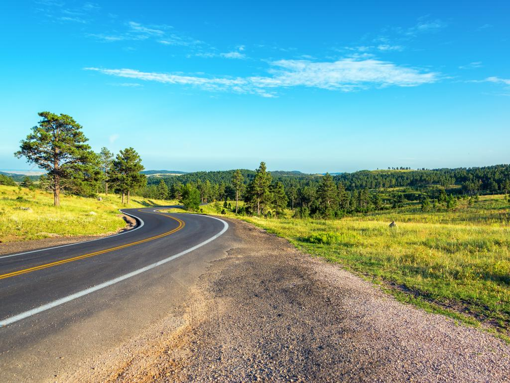 A curve road with grasses and trees on the sides through Black Hills National Forest in South Dakota on a clear and bright day