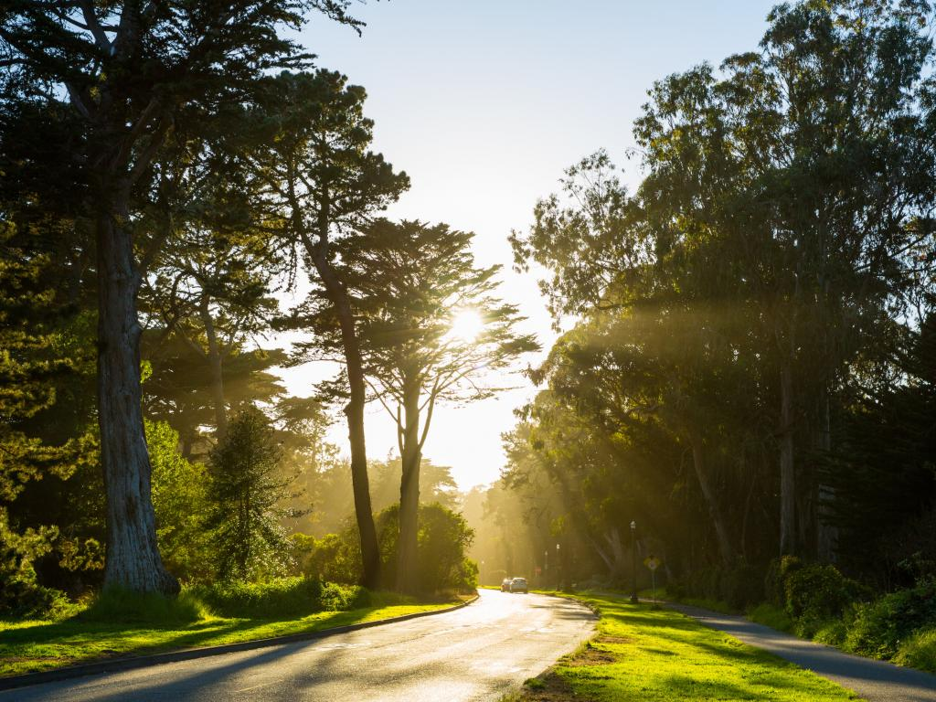 Sun beaming through the trees of Golden Gate Park in San Francisco