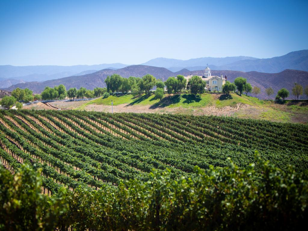 Vineyard in the Temecula Valley in Southern California