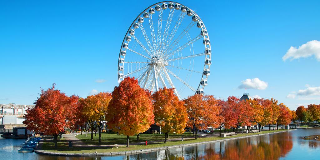 Large ferris wheel surrounded by orange trees in Montreal