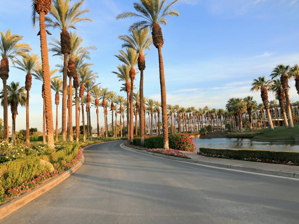 A  scenic view of  the palm trees  along the road on a fine day at Palm Spring, California