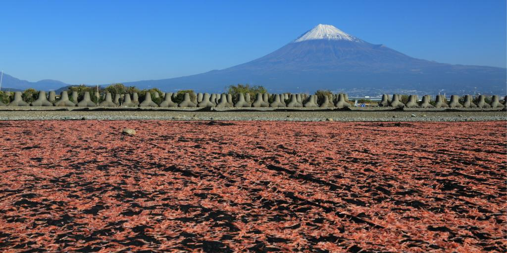 Sakura shrimp drying in the sun in Shizuoka, Japan