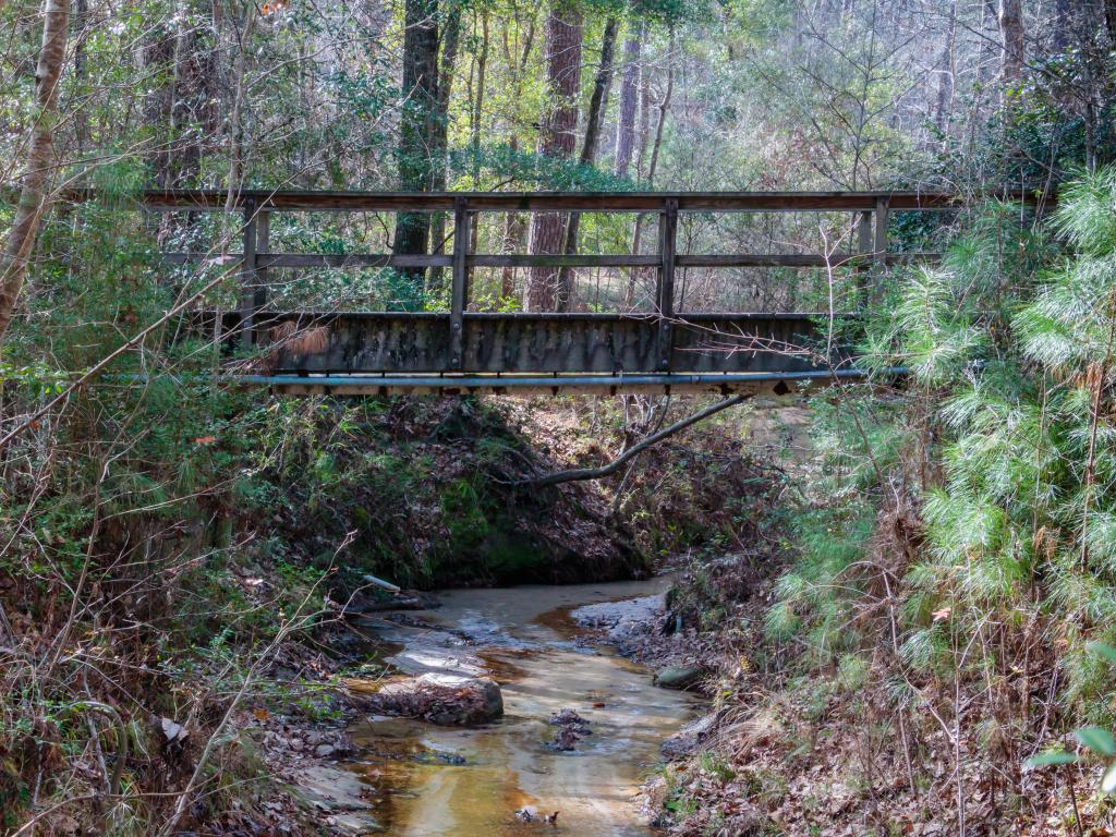 A bridge crossing over a stream in the Angelina National Forest, Texas.