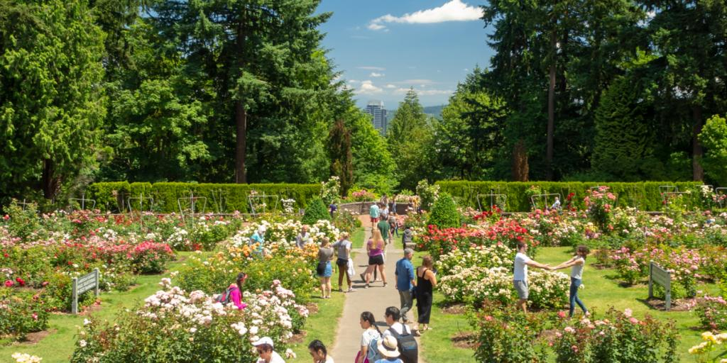 Visitors enjoying the flowers in the International Rose Test Garden in Portland