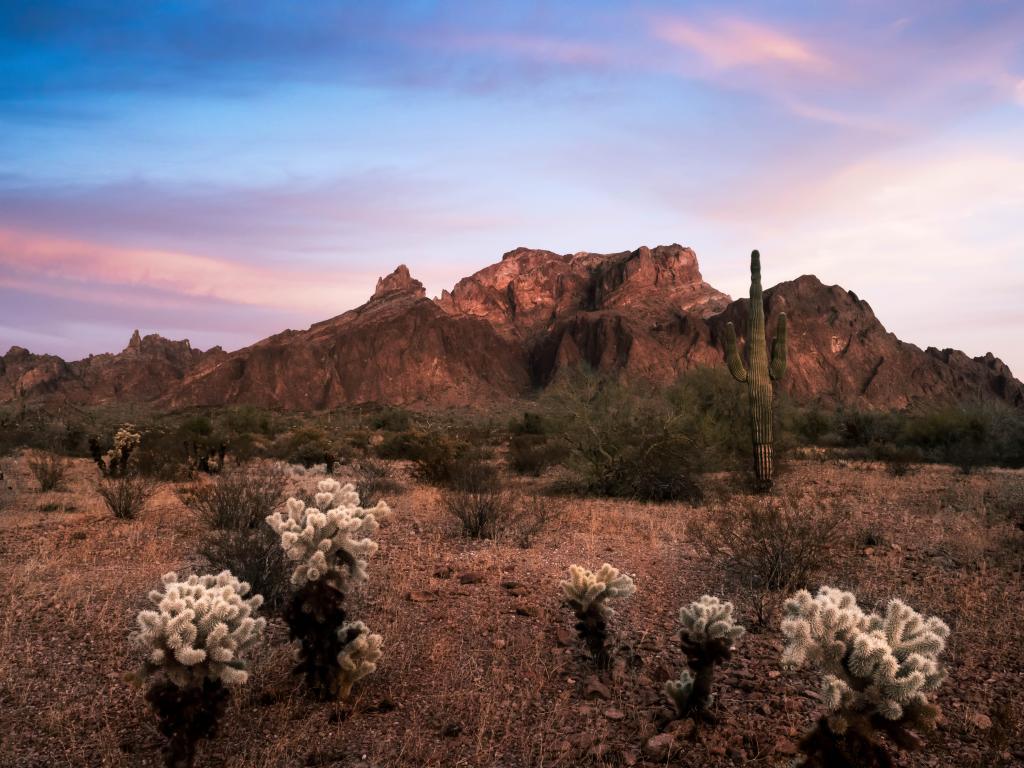 The Kofa Wildlife Refuge with saguaro cacti and flowering desert plants in Arizona.