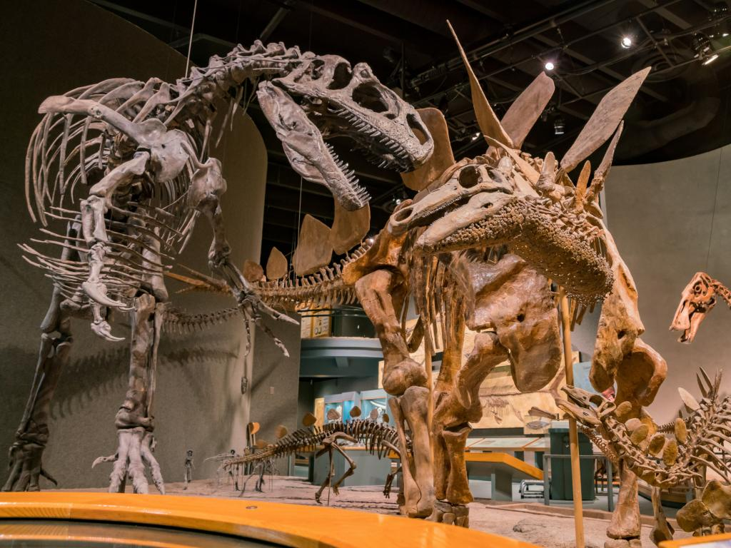 Dinosaur skeletons at the Denver Museum of Nature and Science