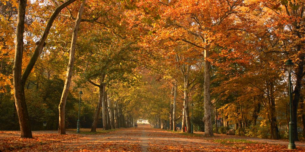 Fall foliage covers the trees and blankets the round in Liget Park, Szeged, in Hungary