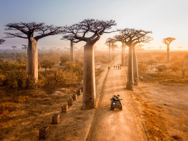 One of the best driving roads in the world - the avenue of of the baobabs