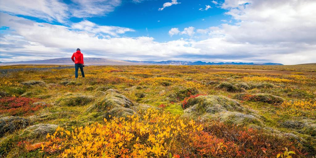 A man standing back to the camera in a field covered by autumn colours, Iceland