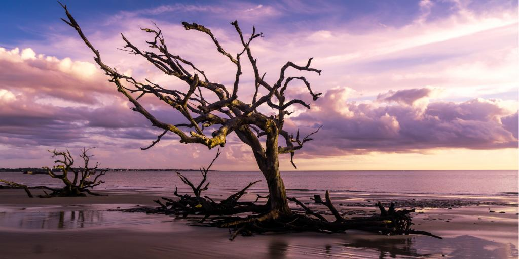 Sunrise view of Driftwood Beach on Jekyll Island, Georgia, with a purple sky
