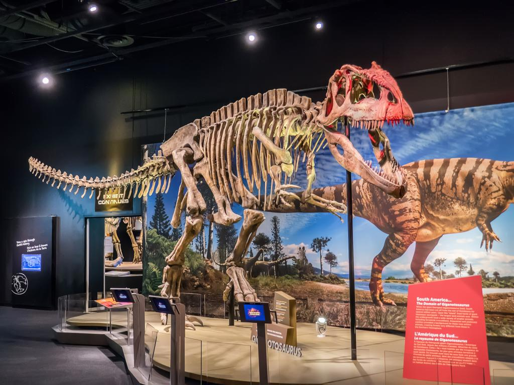Giganotosaurus dinosaur skeleton at the Perot Museum of Nature and Science in Dallas
