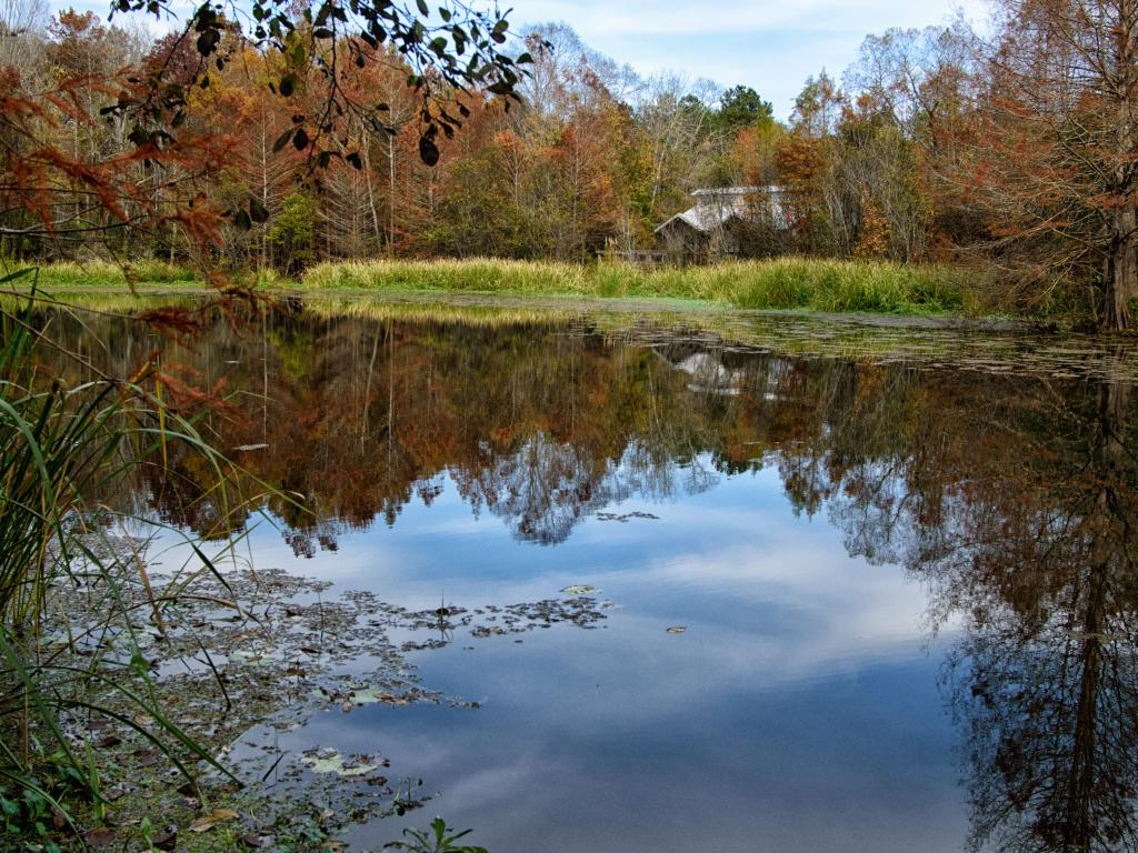 A peaceful pond surrounded by trees in the Bogue Chitto State Park, Louisiana