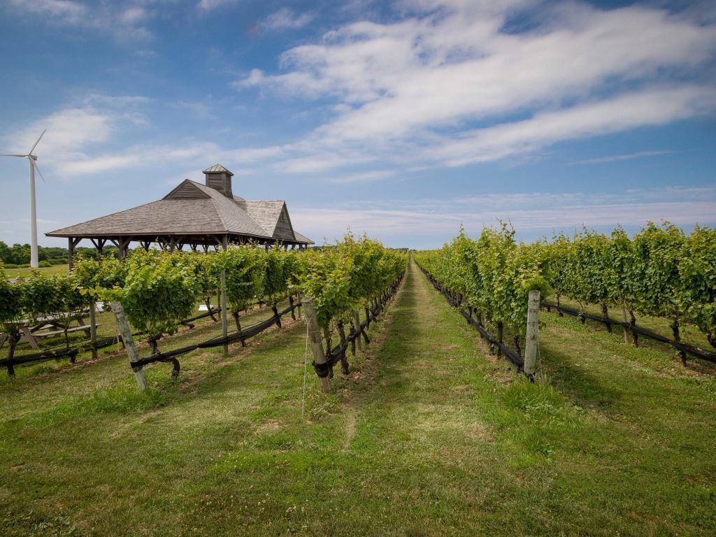Vineyard on Long Island New York
