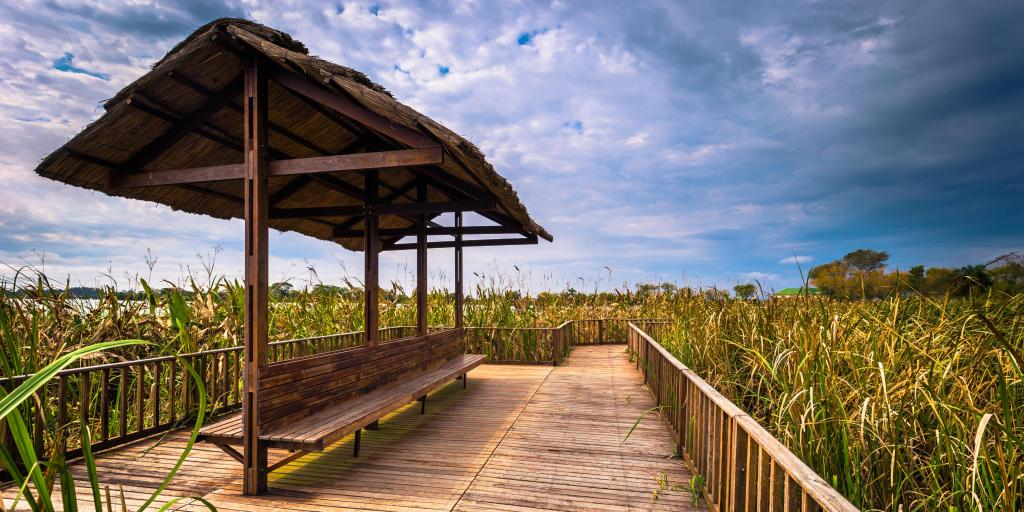 A boardwalk and seat surrounded by long grass at the Provincial Ibera park at Colonia Carlos Pellegrini, Argentina
