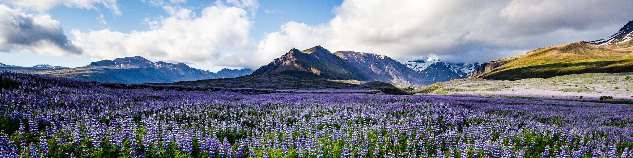 Best time to go to Iceland is June to August when the days are longest
