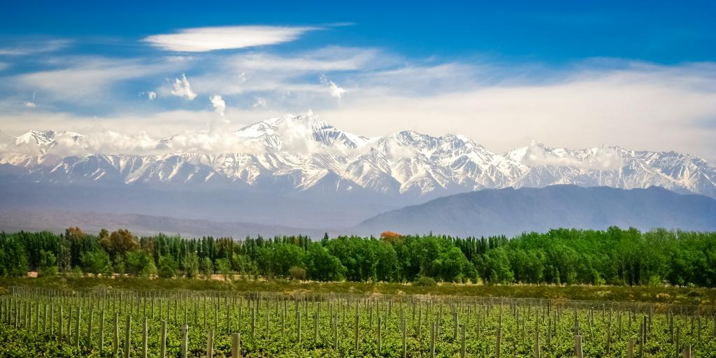Vineyards near Mendoza in Argentina with Andes in the background on a sunny day