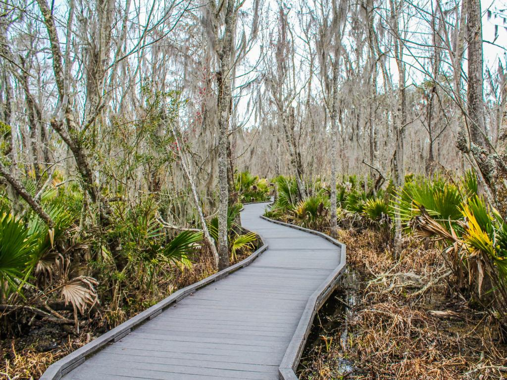 A path through the Barataria Preserve, part of the Jean Lafitte National Historical Park near New Orleans