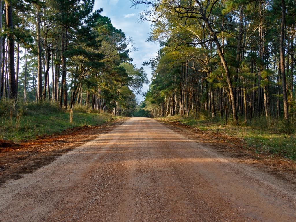Road in Sam Houston National Forest on the road trip from Dallas to Houston