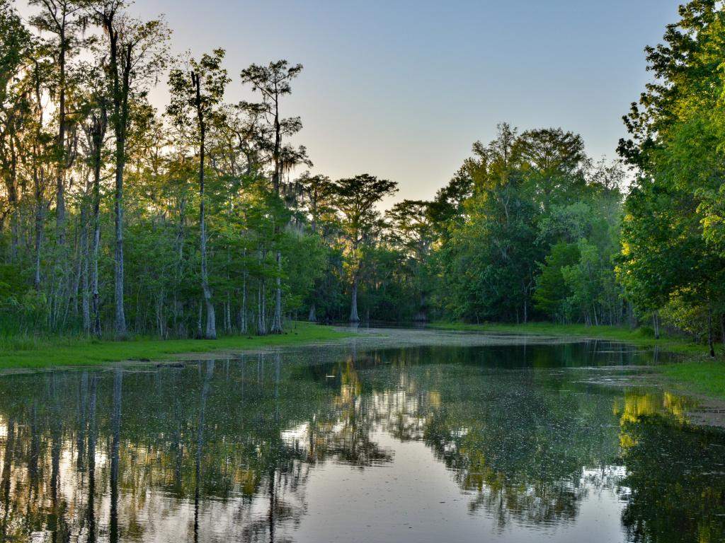 Bayou Black in Houma is an one of the best cypress swamps to visit from New Orleans