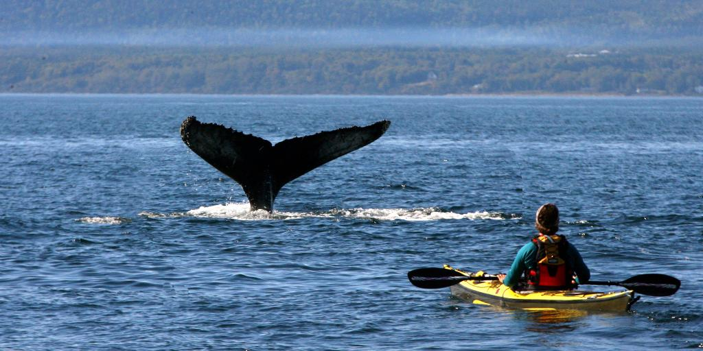 A person in a kayak watching a whale in the river in Tadoussac