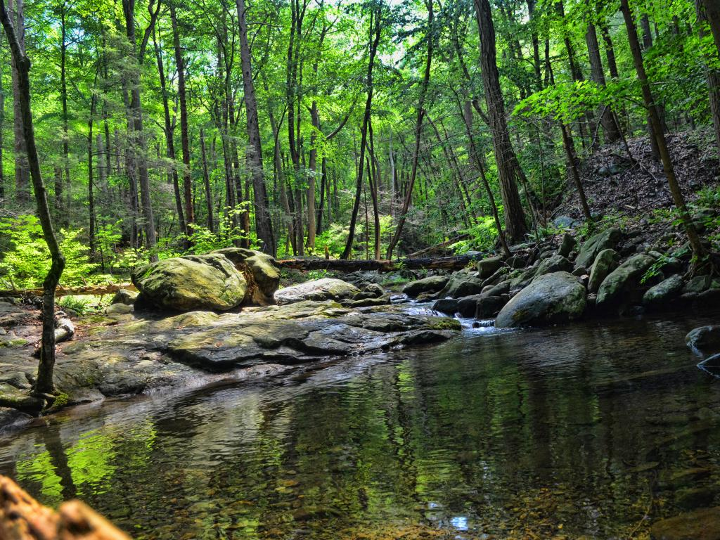 Small creek in Black Rock Forest, Cornwall, New York