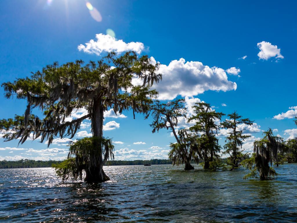 Lake Martin Swamp on a sunny day near Breaux Bridge, Louisiana