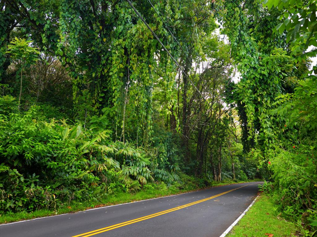 The road to Hana on Hawaii's Maui island passes through specacular rainforest, narrow mountain twists and turns, and offers amazing views.