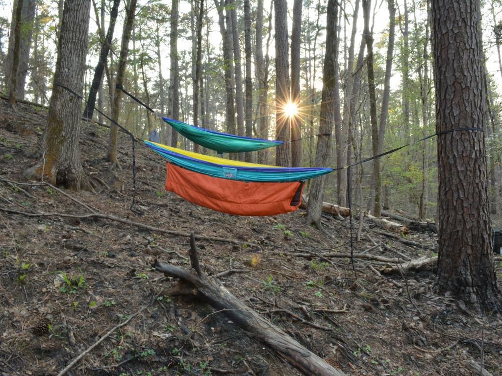 Hammocks hanging between trees in the woods in the Davy Crockett National Forest in Texas.